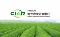中国农业科学院海外农业研究中心-CIAR