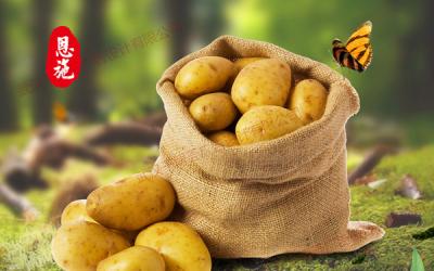 恩施高山马丽科土豆
