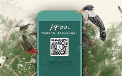 野鸟 APP 推广 banner