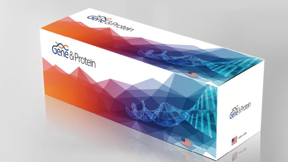 基因和蛋白包装设计
