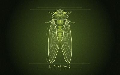 动物插画-cicadidae插画