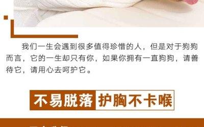 简约温馨大气商务淘宝详情页栓狗...
