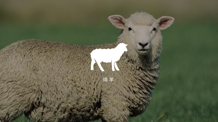 鲁谷梅朵地毯品牌LOGO设计中标图0