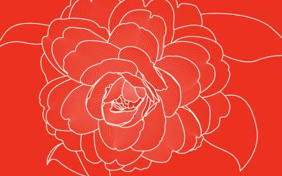 茶花花卉插画亚博客服电话多少