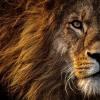 设计师:狮维视觉